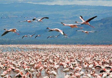 Lake-Nakuru-Trip