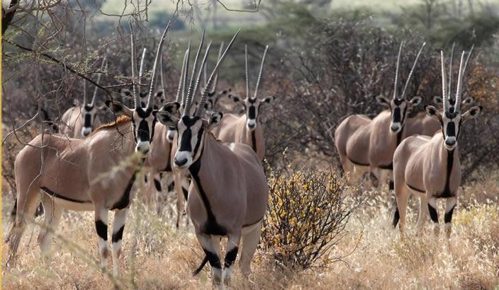 Image result for amboseli-tsavo-west-camping-safaris